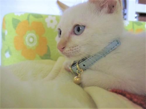 凛々しい顔の仔猫