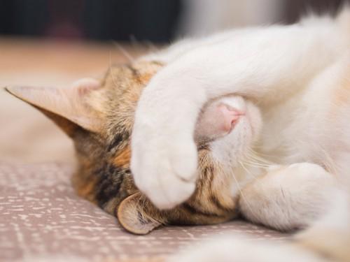 手で顔を隠す猫
