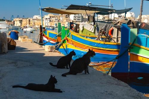 海を眺める猫たち