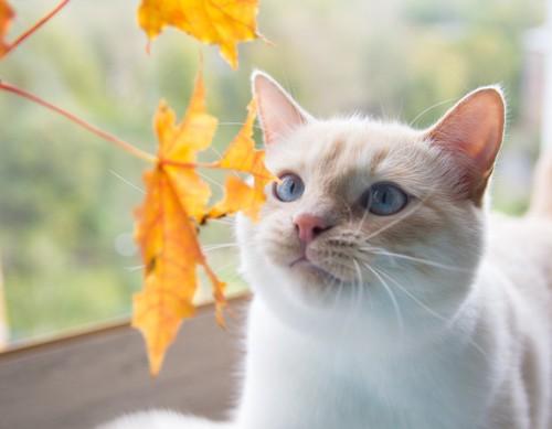 葉を見つめる猫