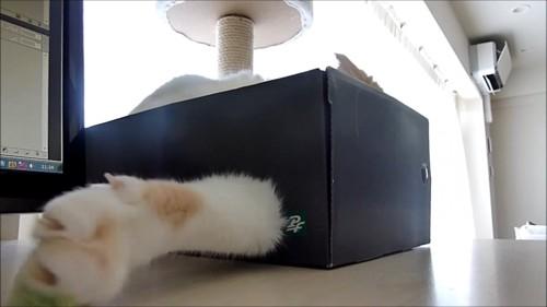 顔を隠して前足を出す猫