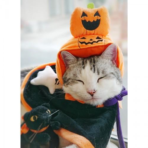 かぼちゃを被った猫