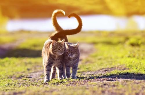 尻尾を絡めて寄り添って歩く2匹の猫