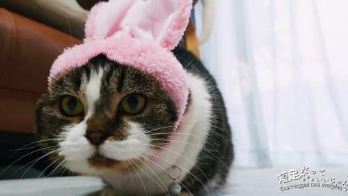 うさぎの被り物をして頭を低くする猫