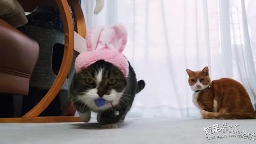 ボールをくわえる猫