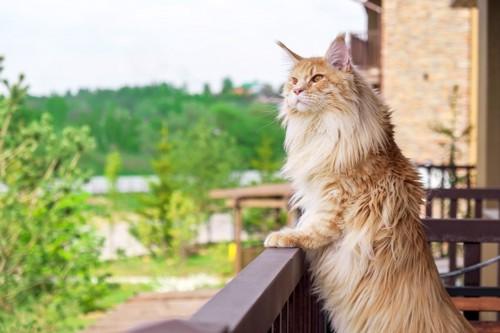 キャットタワーに前足をついて立つ猫