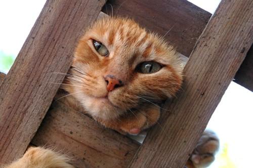 顔がハマった猫