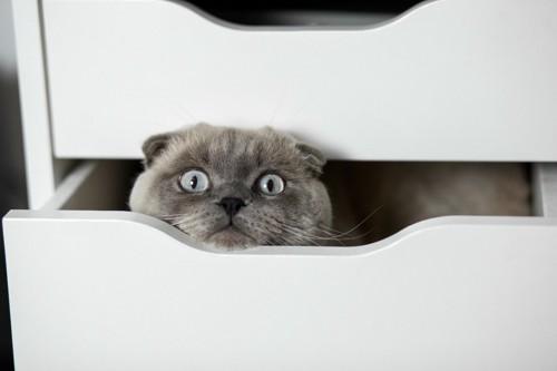 箪笥の引き出しの中の猫