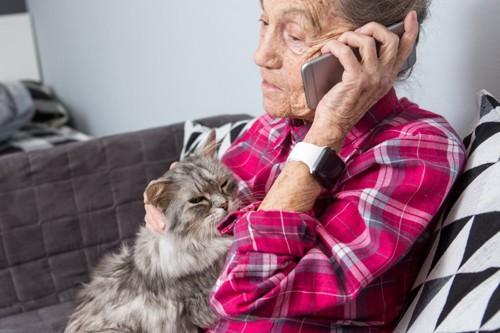 電話をしている女性に抱かれる猫