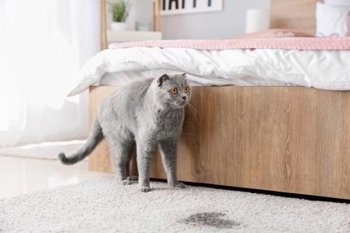 粗相をする猫