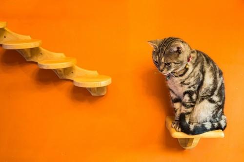オレンジの壁に取り付けられたキャットウォークの下の段に座っている猫