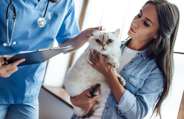 猫の飼い主と獣医