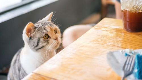 テーブルの上のご飯を欲しがる猫