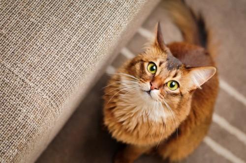 座って見つめる猫