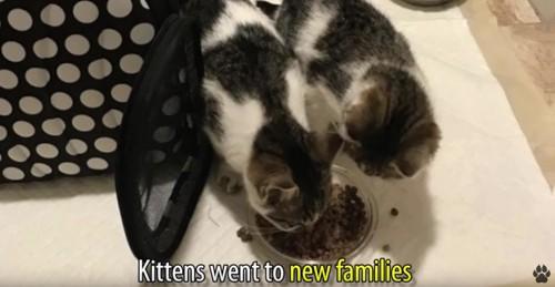 餌を食べる2匹の猫