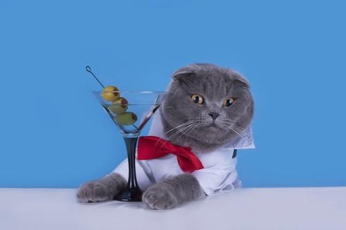 グラスに入ったオリーブの実とグレーの猫