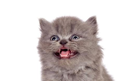 口をあけている猫