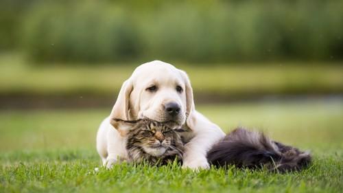 犬の下にいる猫
