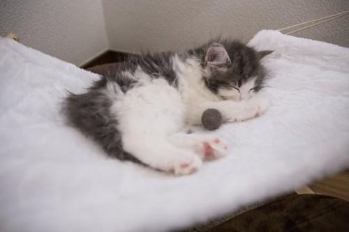 夏用ベッドのハンモックで眠る子猫