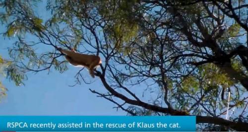 高い木の上にいる猫