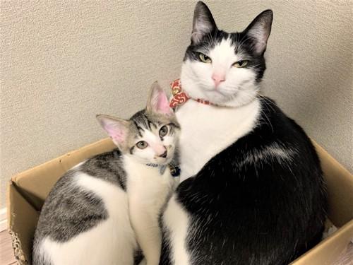 すめしという名の猫とむすびという名の子猫
