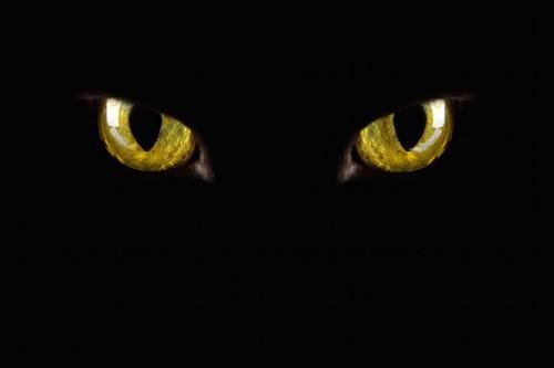 暗闇で光る黒猫の目