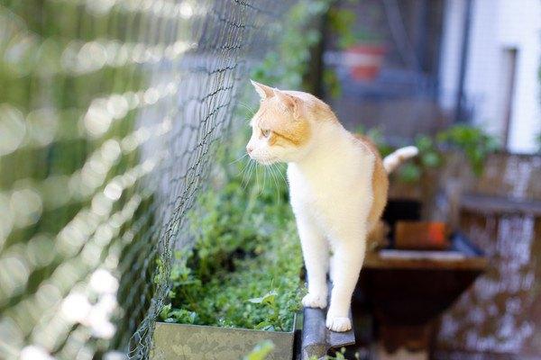 猫と手作りの柵があるベランダ