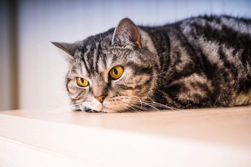 不満のありそうな猫