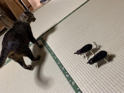 ナス馬と猫