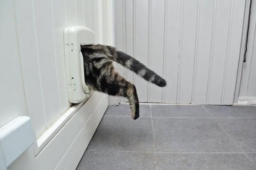猫用の扉から部屋を移動する猫