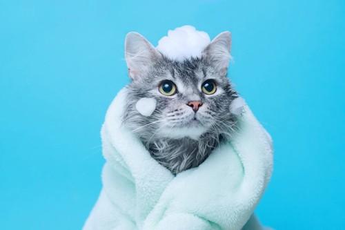 タオルにくるまるシャボンの付いた猫