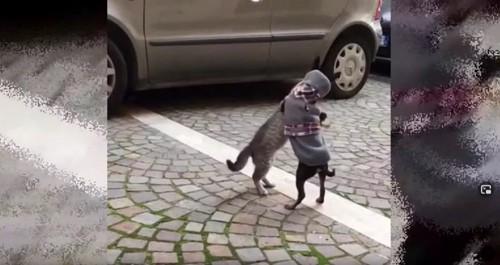 じゃれあう猫と犬