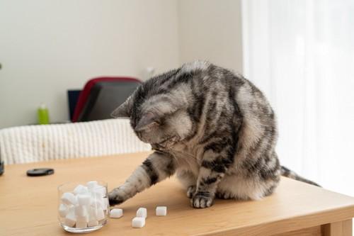 ガラスの入れ物に前足を伸ばす猫