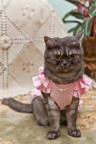 服が嫌そうな猫