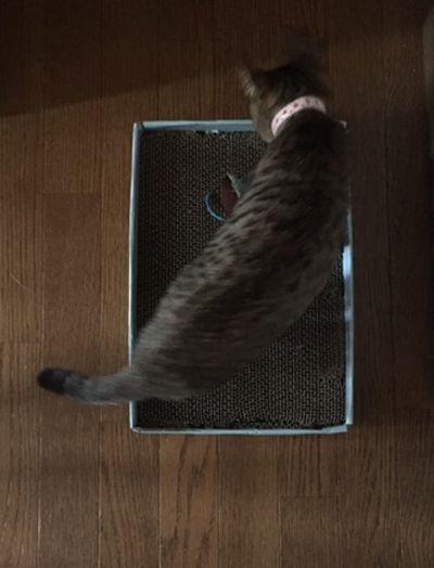 猫が爪を研いでいる