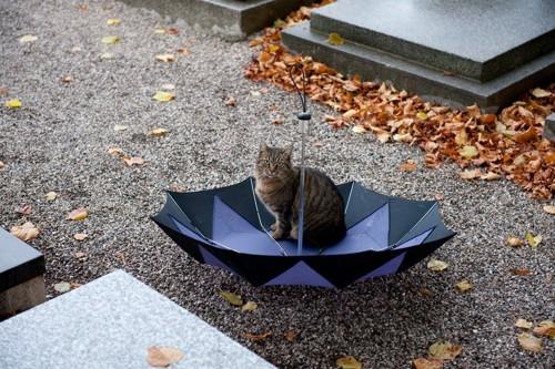 傘に乗る猫