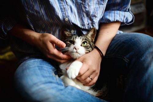 飼い主の膝の上で撫でられている猫