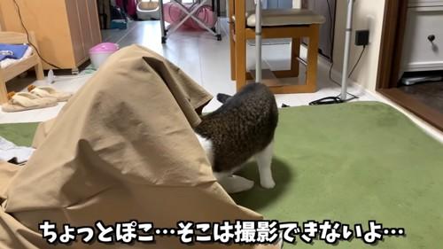 スカートの中に入っていく猫