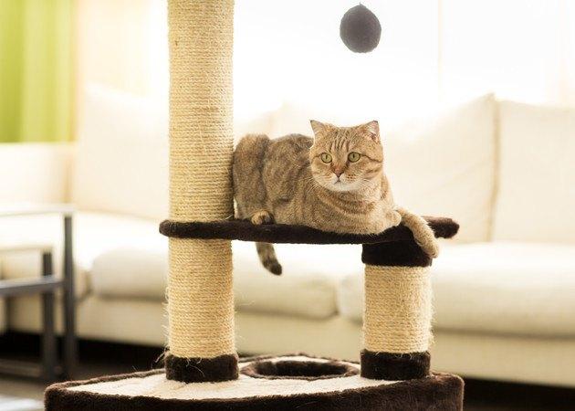 ポール付きキャットタワーでくつろぐ猫