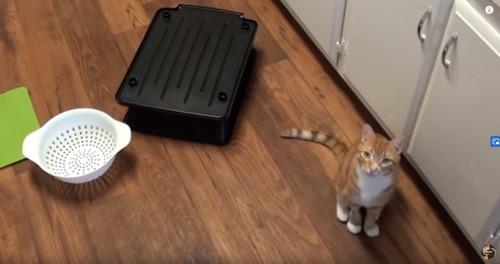 散らかった床に茶とら猫