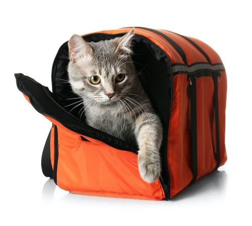 キャリーバッグから出ようとしている猫