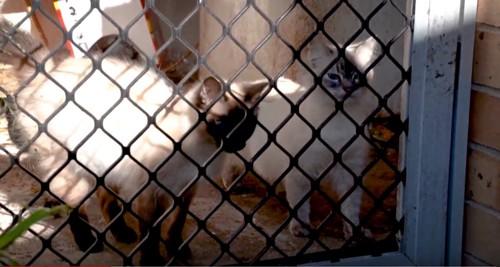 フェンスの中に2匹の猫