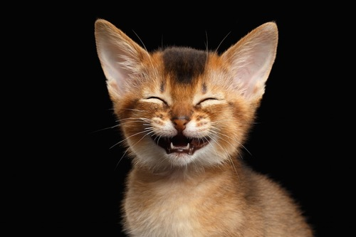 笑っているような表情の猫