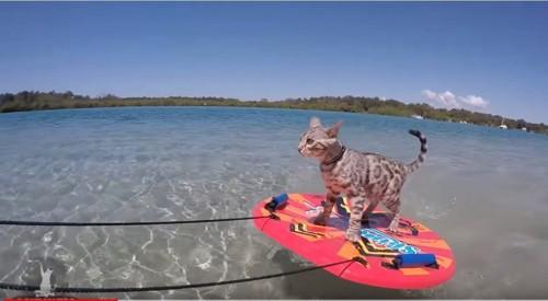 スキムボードに乗る猫