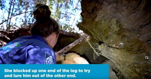 ブランケットで木の穴を塞ぐ女性