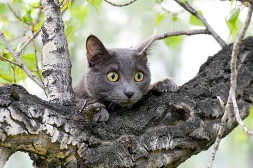 木に登って獲物を狙う猫