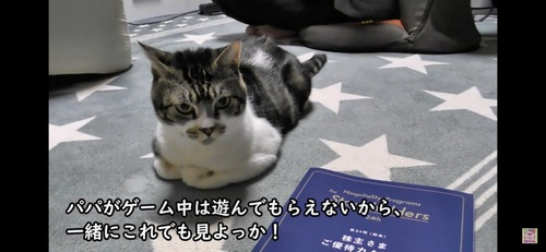 暇そうにしている猫