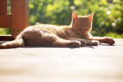 足を伸ばして目を閉じる茶トラ猫