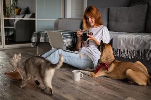女性を見つめる犬と通り過ぎる猫