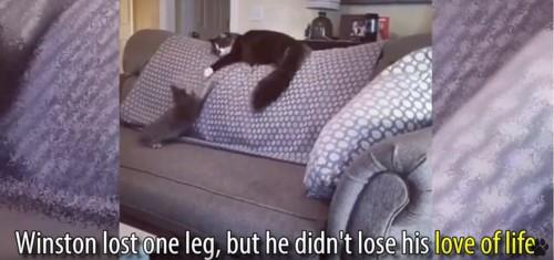 ソファの上で2匹の猫が遊ぶ